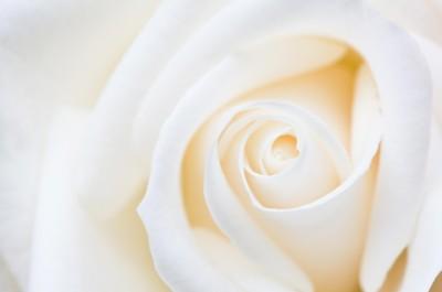 fiori e abiti da sposa